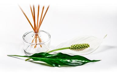 Air Fresheners & Home Fragrance